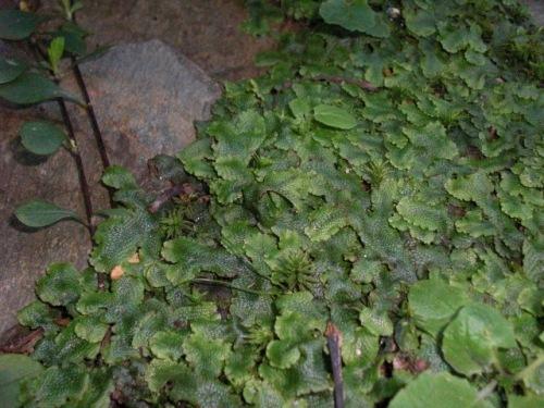 Moss 09